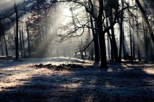 forest-657902_1280